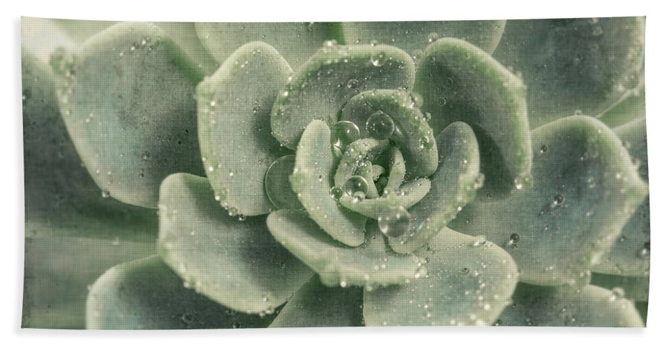 Succulent Bath Sheet featuring the photograph Succulent by Lucid Mood