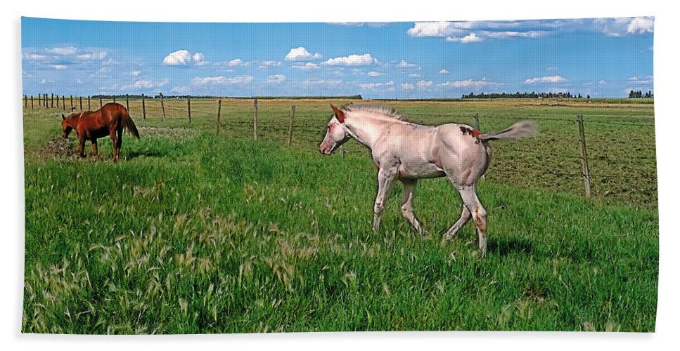 Scenic Bath Sheet featuring the painting Summer Colt by Terry Reynoldson
