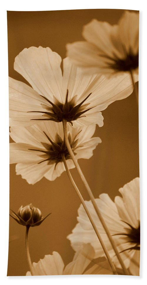 Sepia Hand Towel featuring the photograph Summer Evening Cosmos by Kathy Sampson
