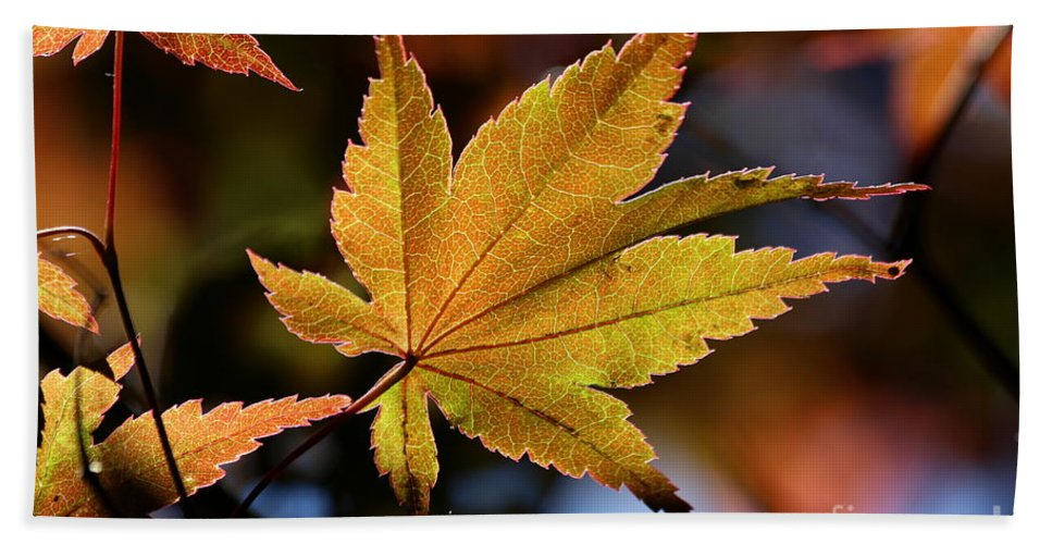 Summer Hand Towel featuring the photograph Summer Japanese Maple - 2 by Kenny Glotfelty