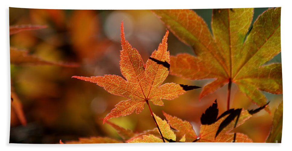Summer Hand Towel featuring the photograph Summer Japanese Maple - 3 by Kenny Glotfelty
