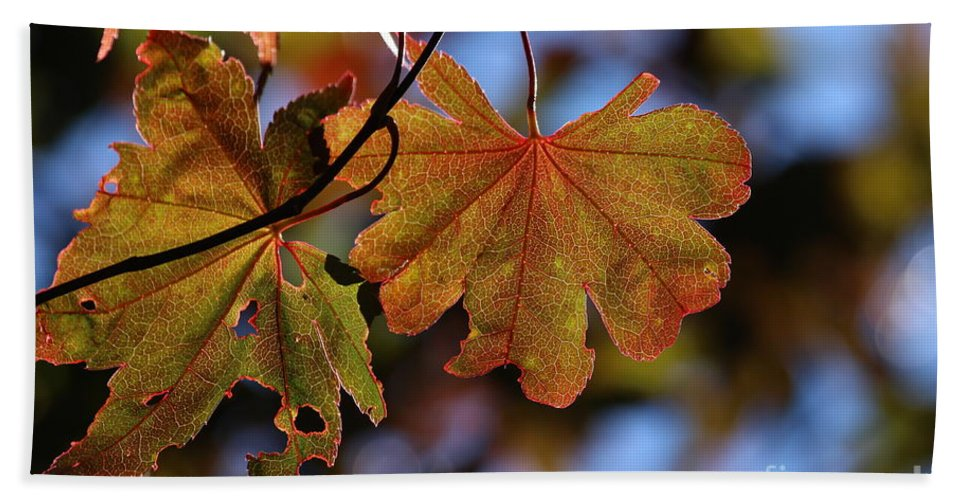 Summer Hand Towel featuring the photograph Summer Japanese Maple - 4 by Kenny Glotfelty