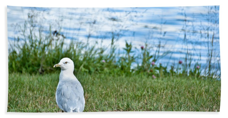Seagull Hand Towel featuring the photograph Summer Sea Gull by Cheryl Baxter