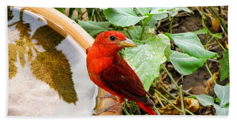 Bird Bath Sheet featuring the photograph Summer Tanager by Shannon Story
