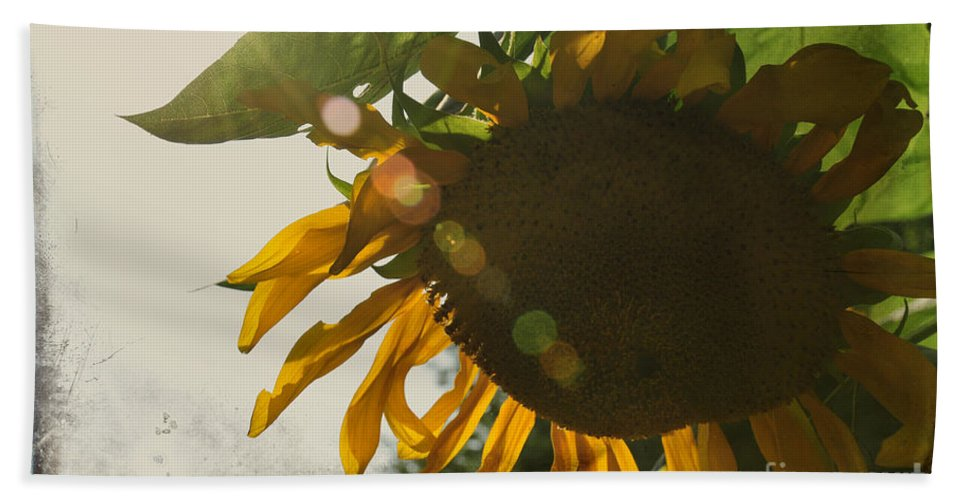 Flower Bath Sheet featuring the photograph Sun And Sunflower by David Arment