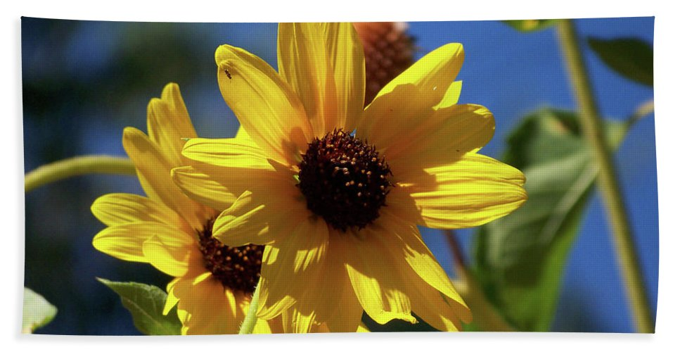 Arizona Bath Sheet featuring the photograph Sun Flowers by Kathy McClure