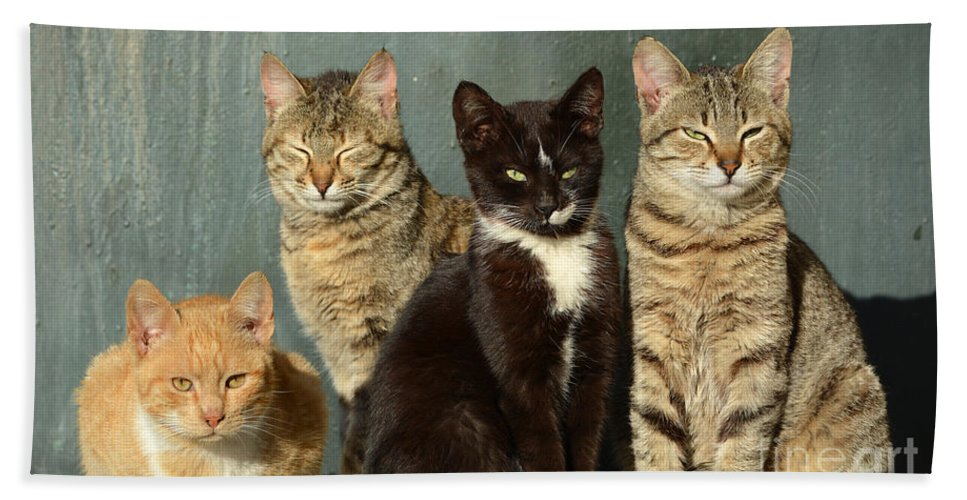 Cat Hand Towel featuring the photograph Sunbathing Cats by Grigorios Moraitis