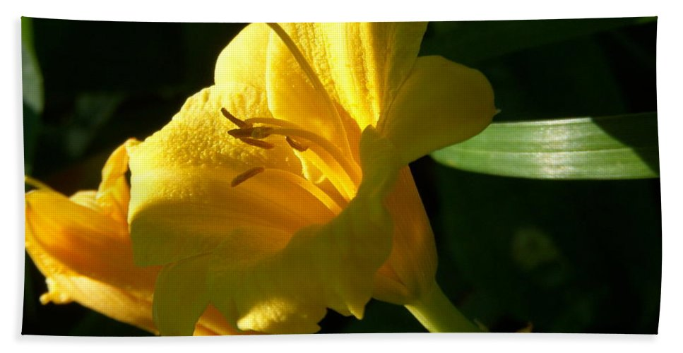 Day Lily Bath Sheet featuring the photograph Sunbeam by Terri Waselchuk