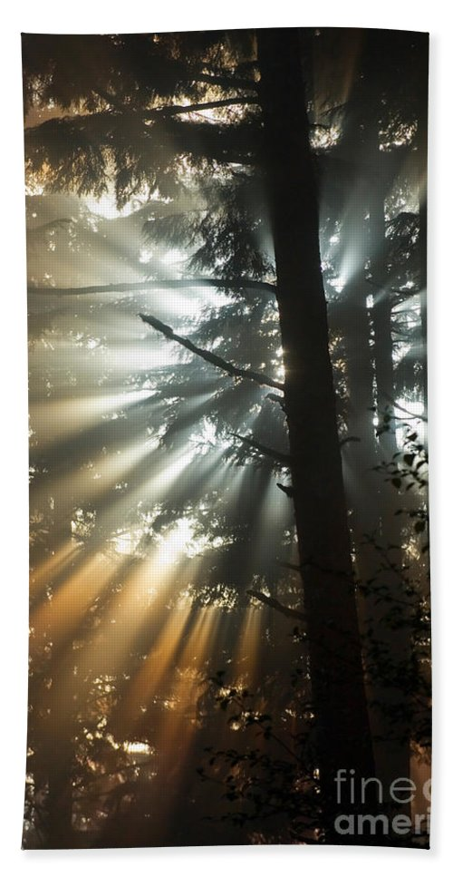 Sunbeam Hand Towel featuring the photograph Sunbeams Through Trees by John Shaw