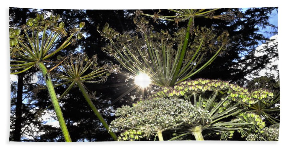 Indian Rhubarb Hand Towel featuring the photograph Sunburst by Cathy Mahnke