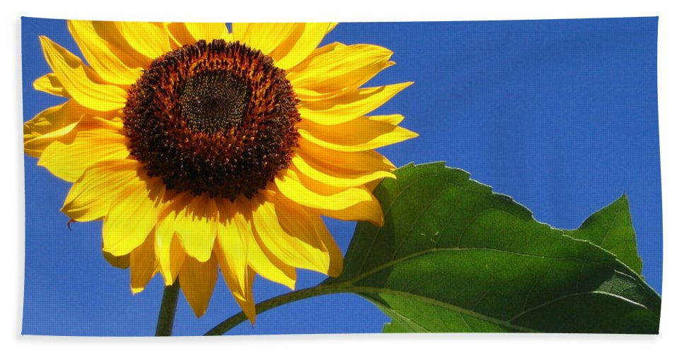 Sunflower Bath Sheet featuring the photograph Sunflower Alone by Line Gagne
