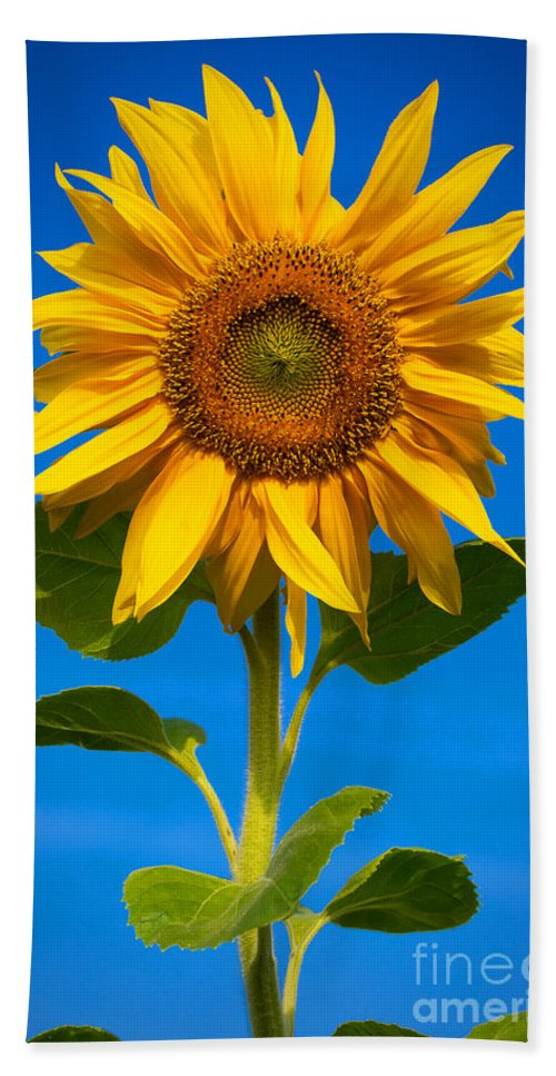 Outdoor Hand Towel featuring the photograph Sunflower by Carsten Reisinger