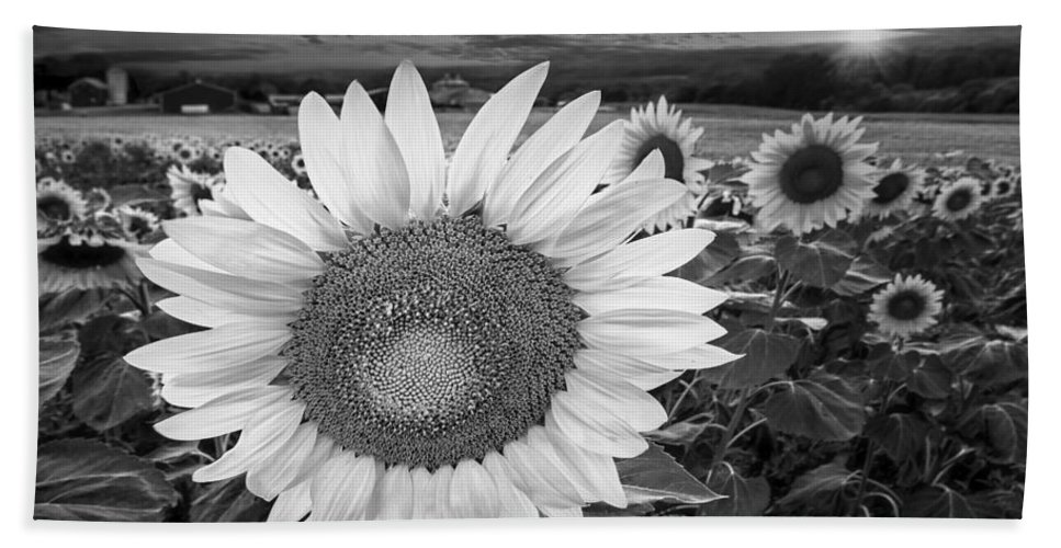 Sunflower Bath Sheet featuring the photograph Sunflower Field Forever Bw by Susan Candelario