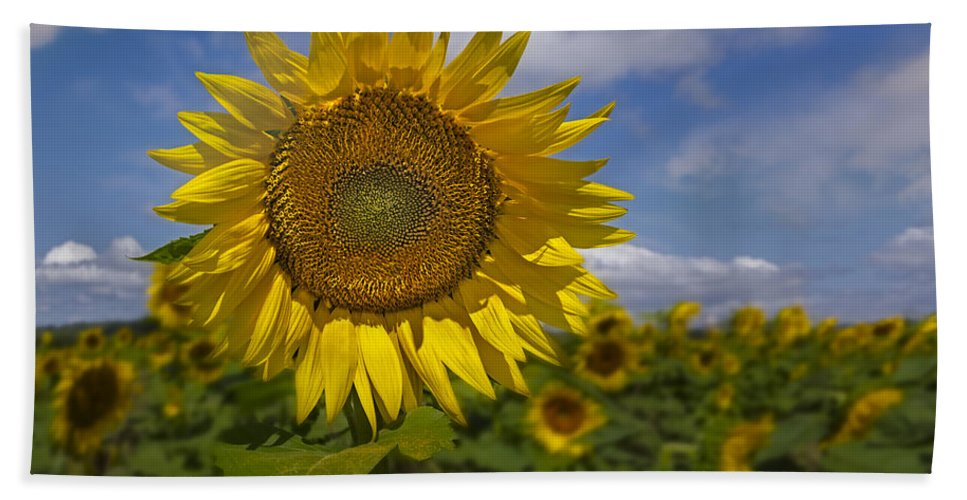 Petals Hand Towel featuring the photograph Sunflower Field by Susan Candelario