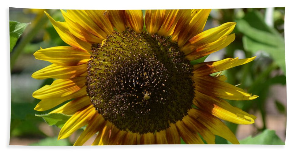 Sunflower Glory Hand Towel featuring the photograph Sunflower Glory by Luther Fine Art