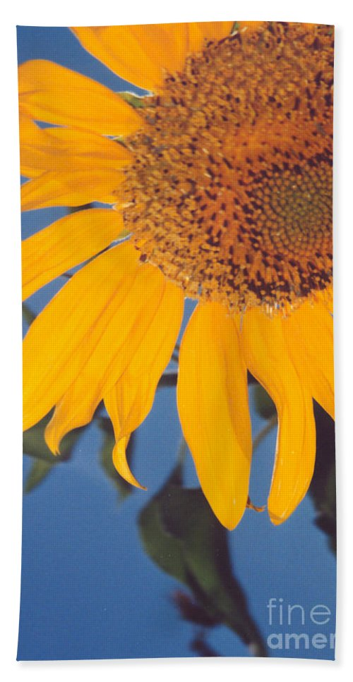 Flower Bath Towel featuring the photograph Sunflower In The Corner by Heather Kirk