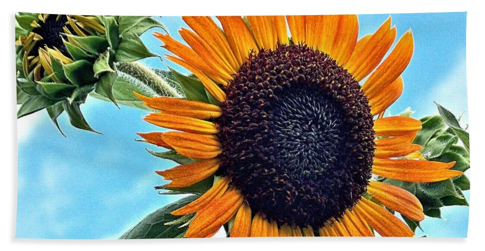 Sunflower Bath Sheet featuring the photograph Sunflower In The Sky by Annette Allman