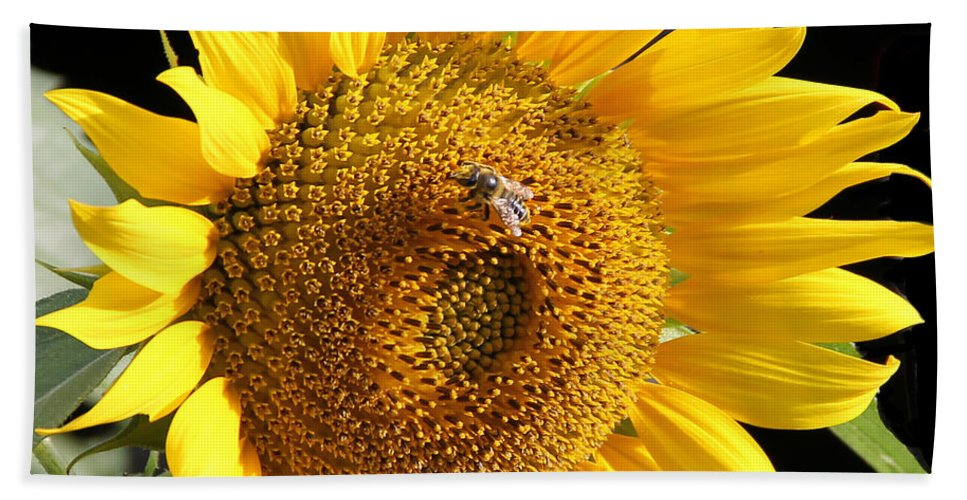 Jean Plout Bath Sheet featuring the photograph Sunflower-jp2437 by Jean Plout