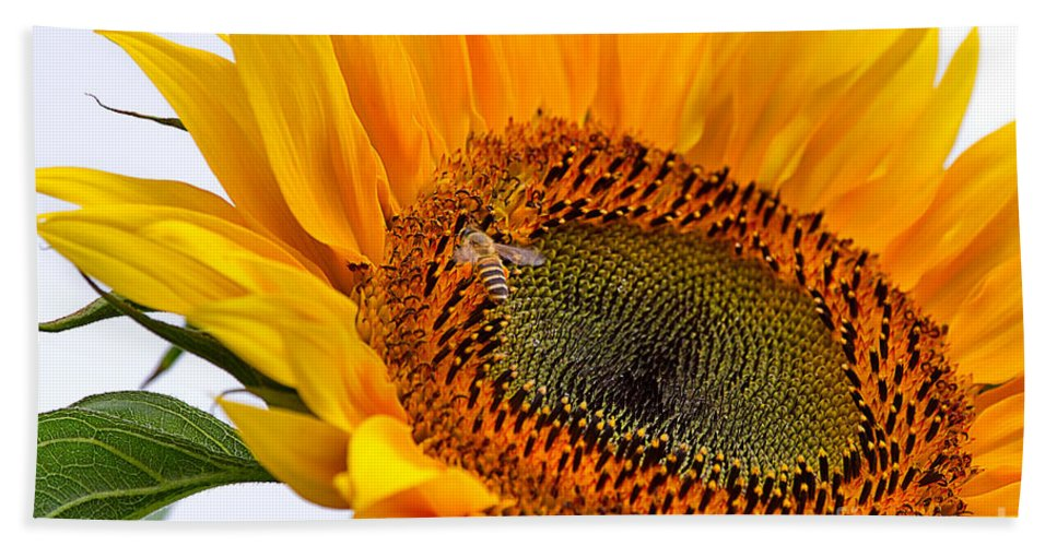 Nature Hand Towel featuring the photograph Sunflower by Louise Heusinkveld