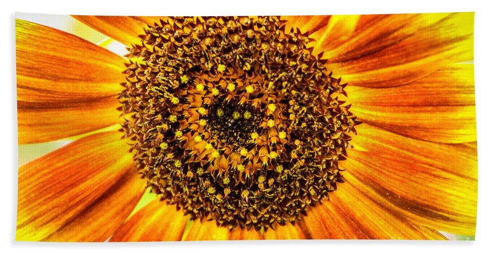 Sunflower Bath Sheet featuring the photograph Sunflower Macro by Grace Grogan