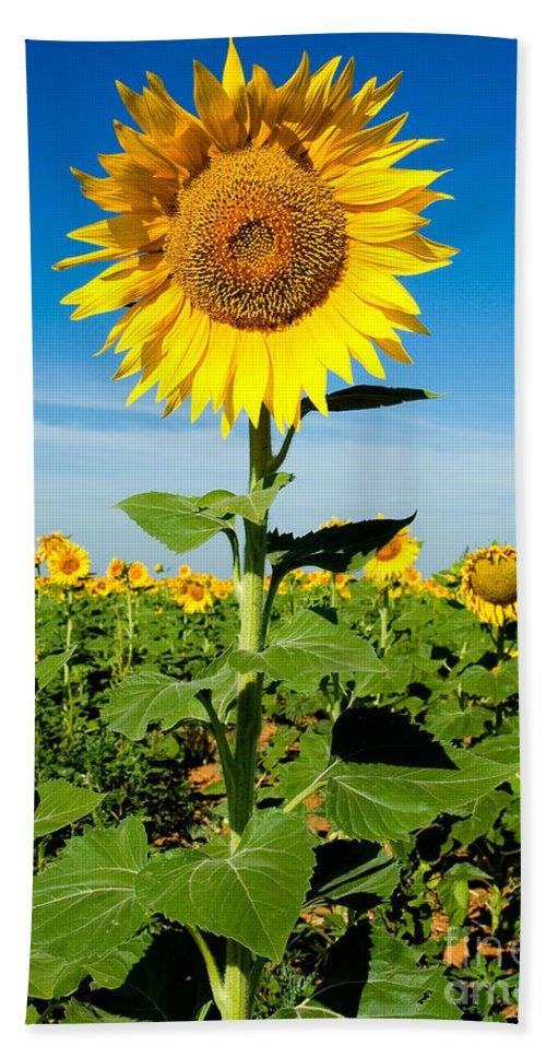 A Sunflower Photograph Hand Towel featuring the photograph Sunflower by Mae Wertz