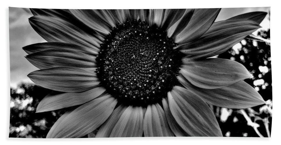 Sunflower Hand Towel featuring the photograph Sunflower In Black And White by Nina Ficur Feenan