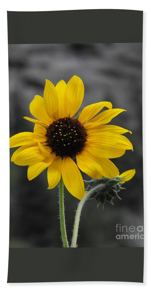 Sunflower Hand Towel featuring the photograph Sunflower On Gray by Rebecca Margraf