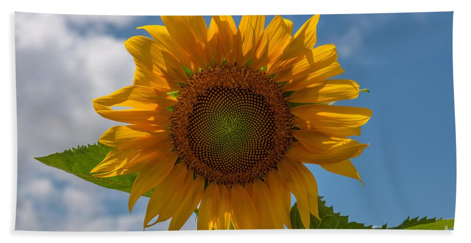 Sunflower Bath Sheet featuring the photograph Sunflower Power by Dale Powell