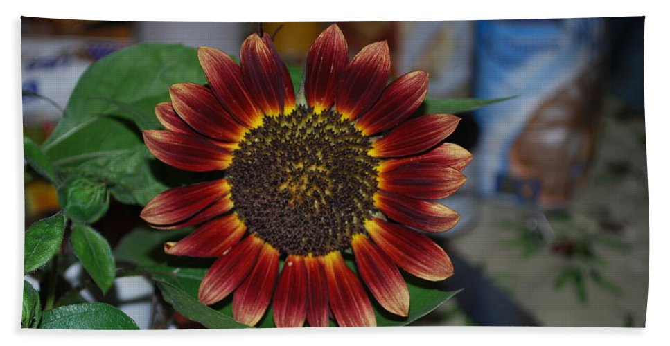 Squirrels Favorite Snack Hand Towel featuring the photograph Sunflower by Robert Floyd