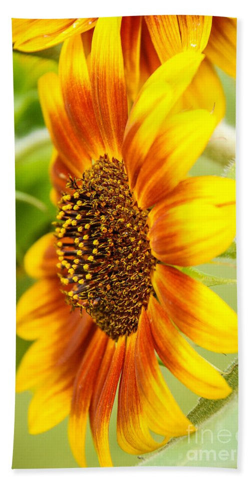 Sunflower Bath Sheet featuring the photograph Sunflower Side Portrait by Grace Grogan