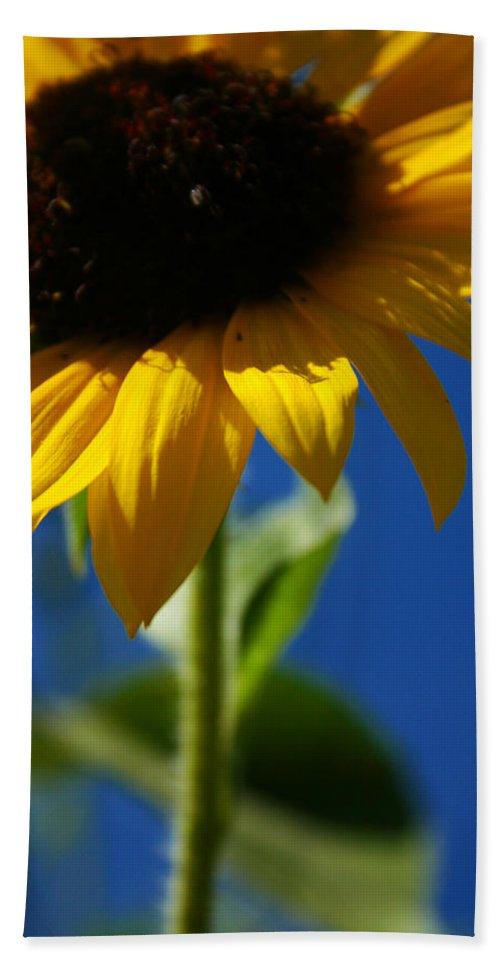 Sunflower Bath Sheet featuring the photograph Sunflower Three by David Sanchez