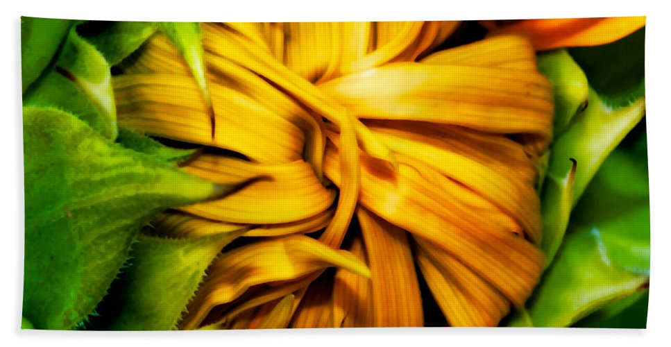 Sunflower Bath Sheet featuring the photograph Sunflower Volunteer by Gwyn Newcombe