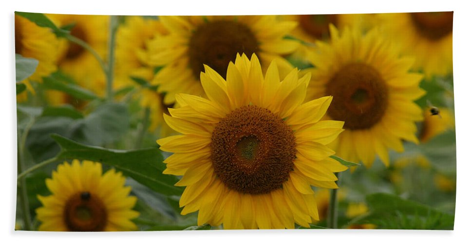 Denyse Duhaime Photography Hand Towel featuring the photograph Sunflowers At The Farm by Denyse Duhaime