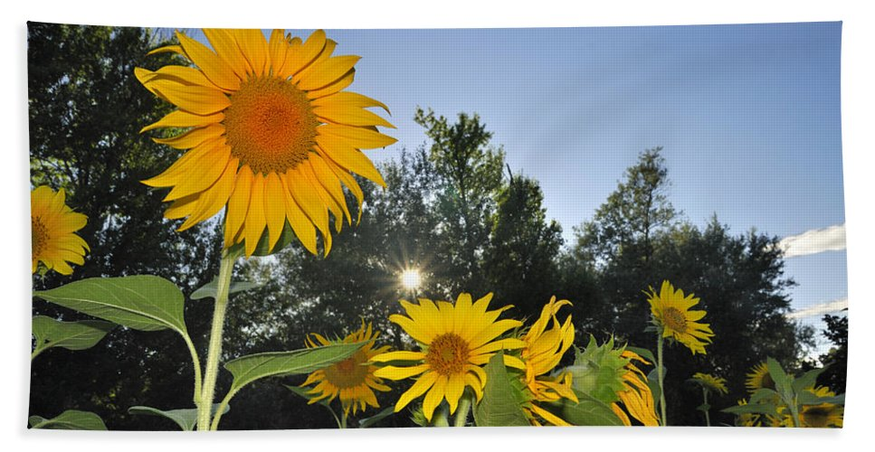 Sunflower Hand Towel featuring the photograph Sunflowers by Guido Montanes Castillo