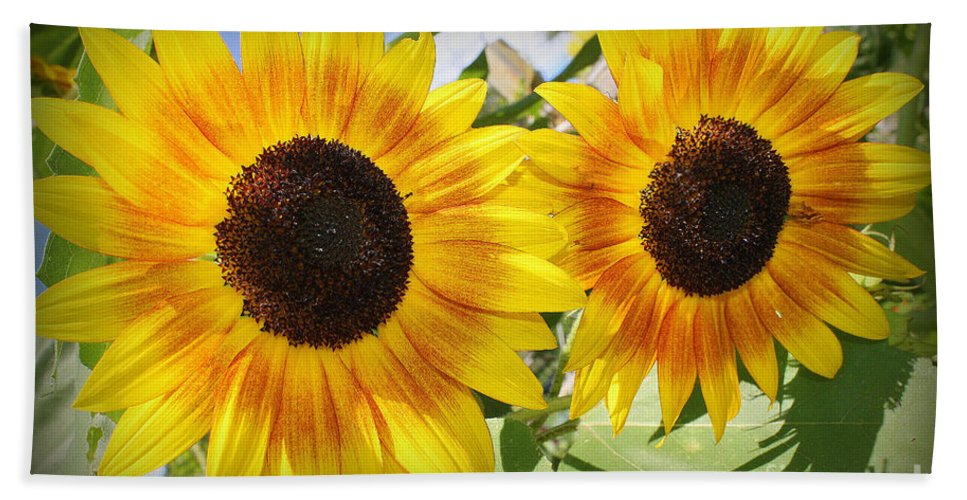 Sunflowerfield Hand Towel featuring the photograph Sunflowers In Full Bloom by Dora Sofia Caputo Photographic Design and Fine Art