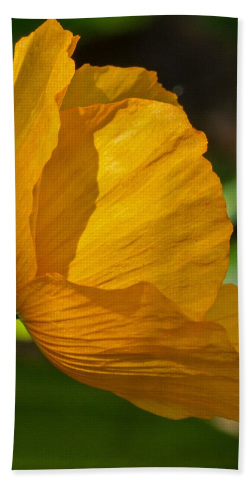 Sun Bath Sheet featuring the photograph Sunkissed Poppy by Jordan Blackstone