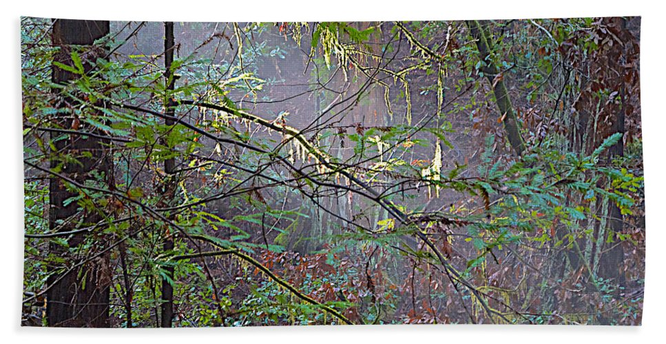 Sunlight Highlights In Armstrong Redwoods State Preserve Near Guerneville Hand Towel featuring the photograph Sunlight Highlights In Armstrong Redwoods State Preserve Near Guerneville-ca by Ruth Hager
