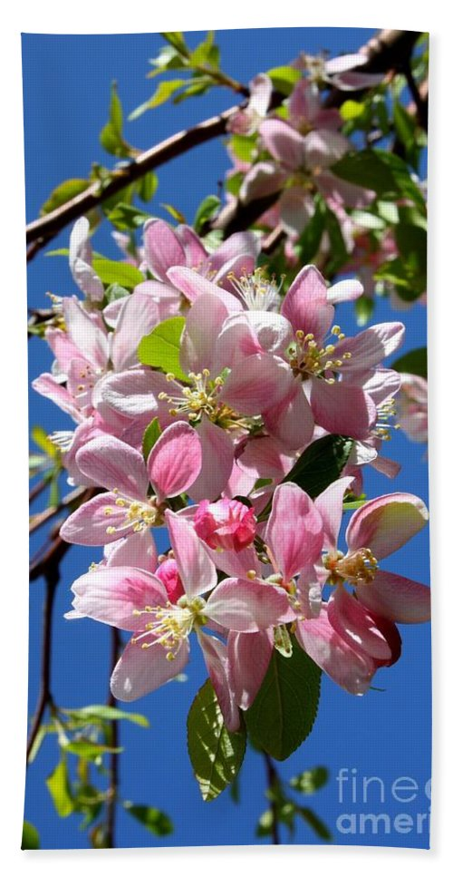 Blossoms Hand Towel featuring the photograph Sunlight On Spring Blossoms by Carol Groenen