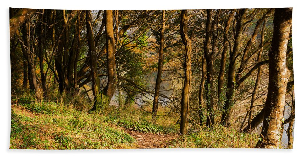 Woodland Walk Bath Sheet featuring the photograph Sunlit Woods In Late Autumn by Louise Heusinkveld