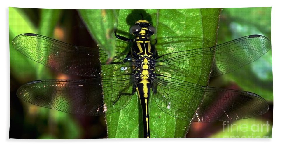 Color Photography Hand Towel featuring the photograph Sunning Dragon by Sue Stefanowicz