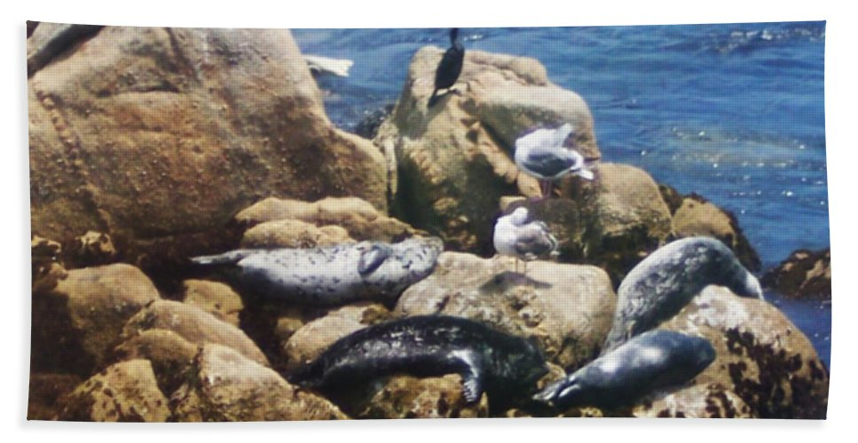 Sunning Seals Hand Towel featuring the photograph Sunning Seals by Pharris Art