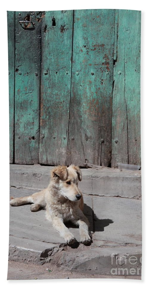 Dog Bath Towel featuring the photograph Dog Enjoying A Sunny Doorstep by James Brunker
