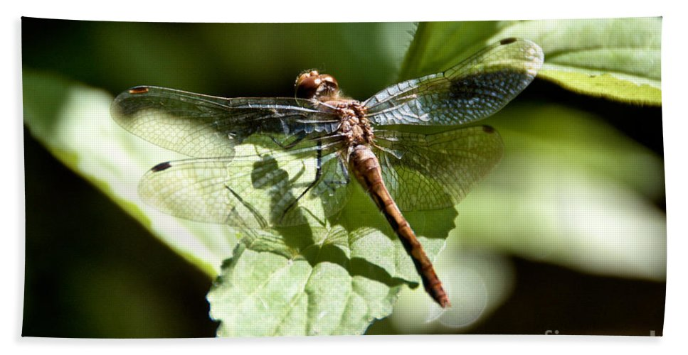 Dragonfly Hand Towel featuring the photograph Sunny Dragonfly by Cheryl Baxter