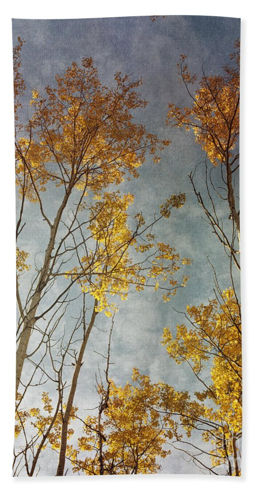 Leaves Bath Towel featuring the photograph Sunny Leaves Tall by Priska Wettstein