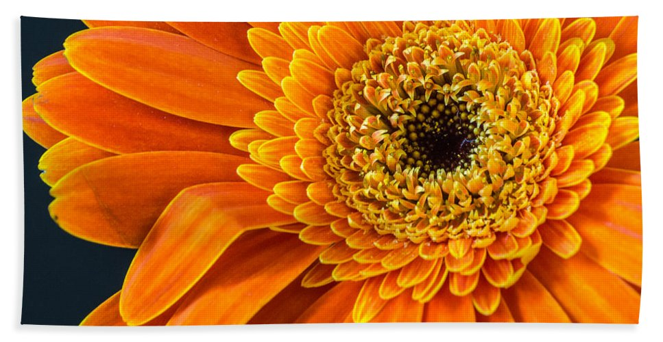 Orange Hand Towel featuring the photograph Sunny Side Up by Bill Pevlor