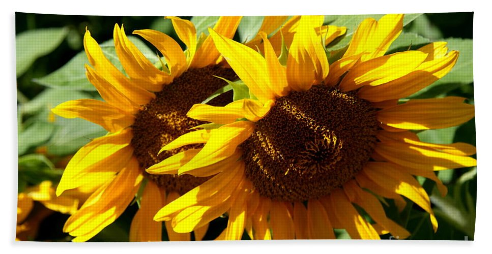Sunflower Hand Towel featuring the photograph Sunny Sisters by Christiane Schulze Art And Photography