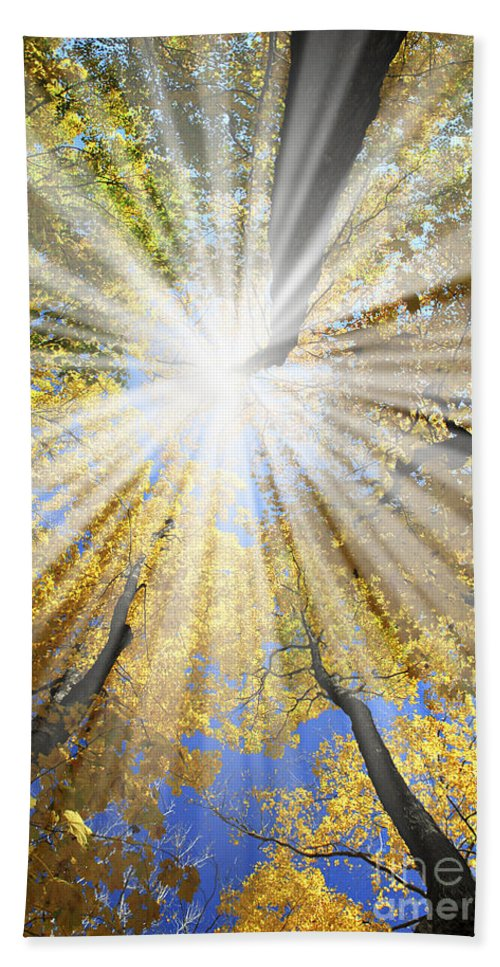 Autumn Hand Towel featuring the photograph Sunrays In The Forest by Elena Elisseeva