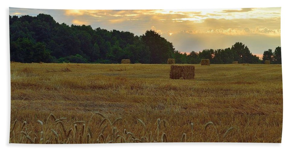 Sunrise Hand Towel featuring the photograph Sunrise At The Wheat Field by Ray Sheley