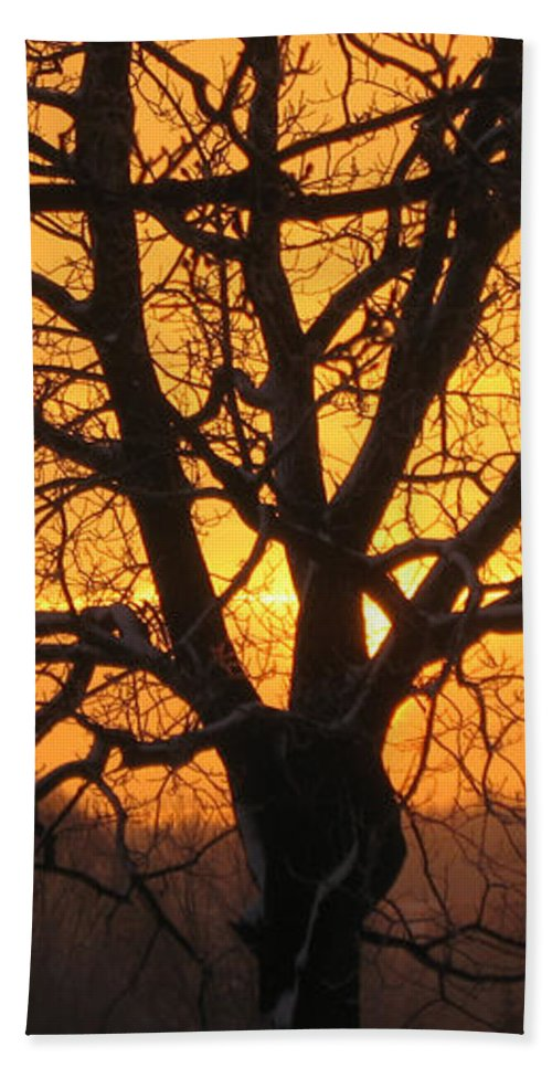 Sunrise Bath Sheet featuring the photograph Sunrise Behind Walnut Tree by Conni Schaftenaar