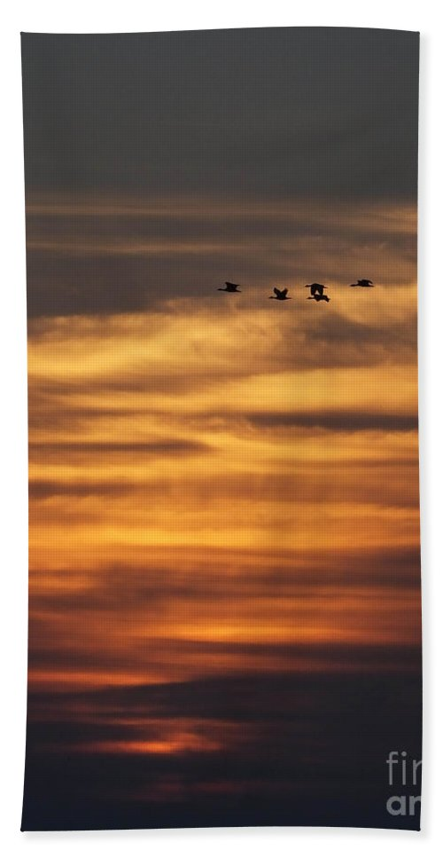 Texas Hand Towel featuring the photograph Sunset Flyby Fulton Texas by Lizi Beard-Ward